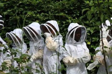 Children dressed in beekeeping overalls